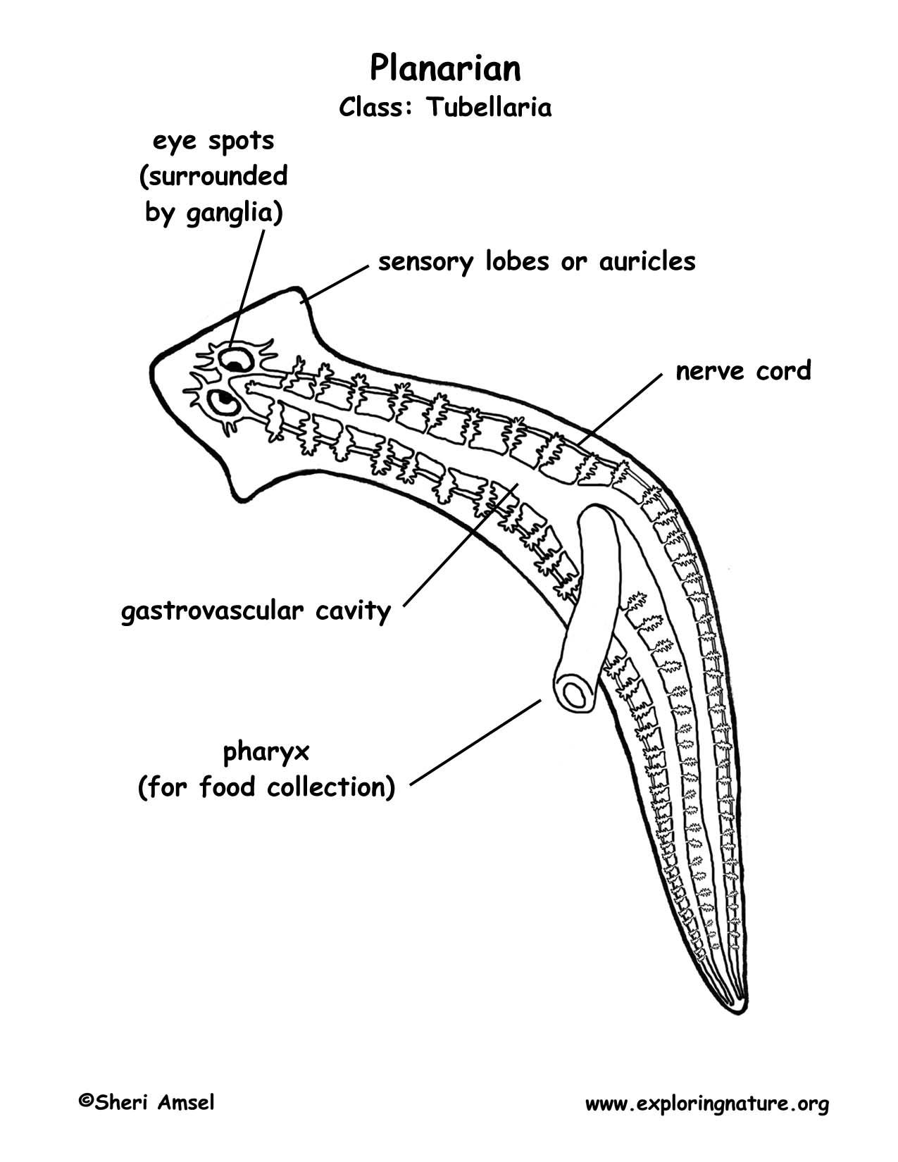 Jeffres Celia Biology Preap Biology Yearbook 4th Nine Weeks [ 1650 x 1275 Pixel ]